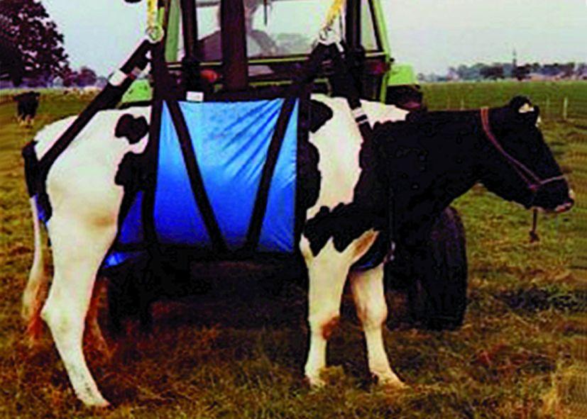 Hebegeräte für Kühe - Kuh-Halte- und Hebegeschirr HB 220
